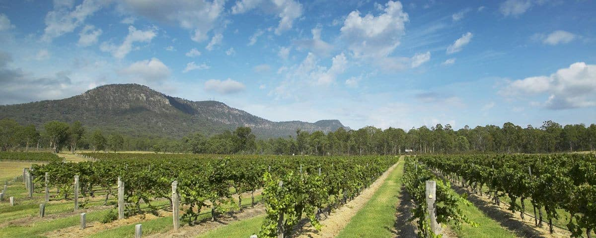 Wollemi Weeds and Wine | Hunter Valley