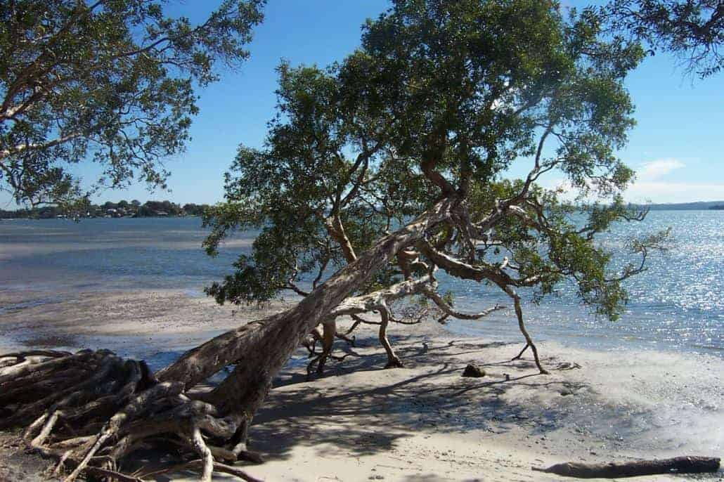 NSW | Intrepid Clean-up Australia Day | Port Stephens