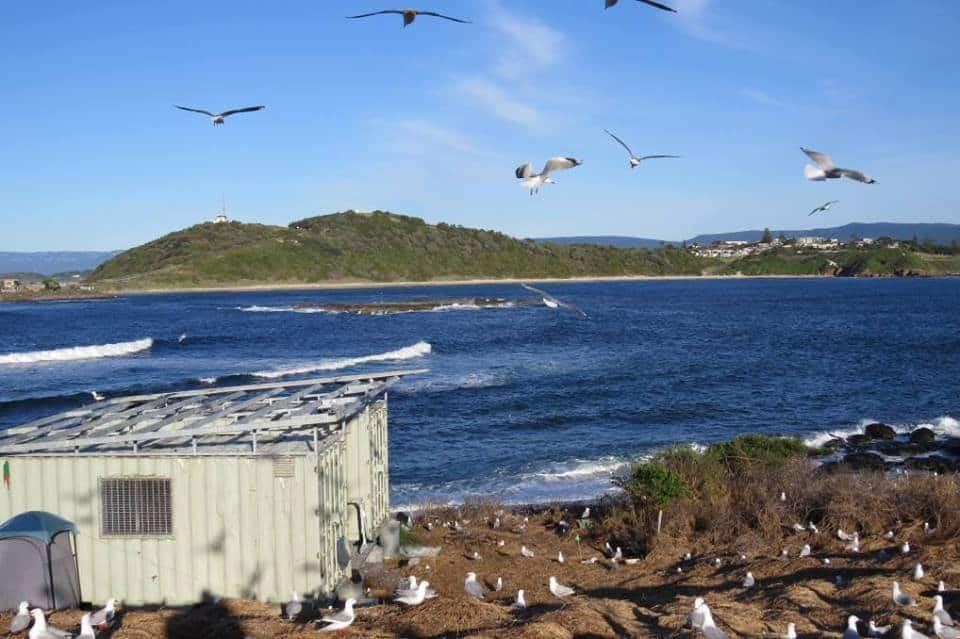 NSW | Five Islands Seabird Retreat
