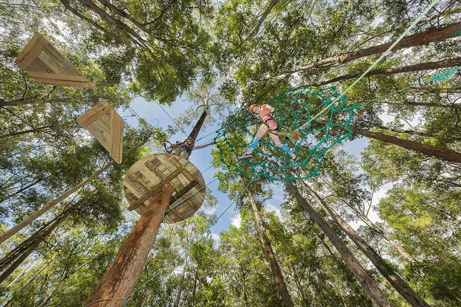 NSW | Tree Tops Adventure Day