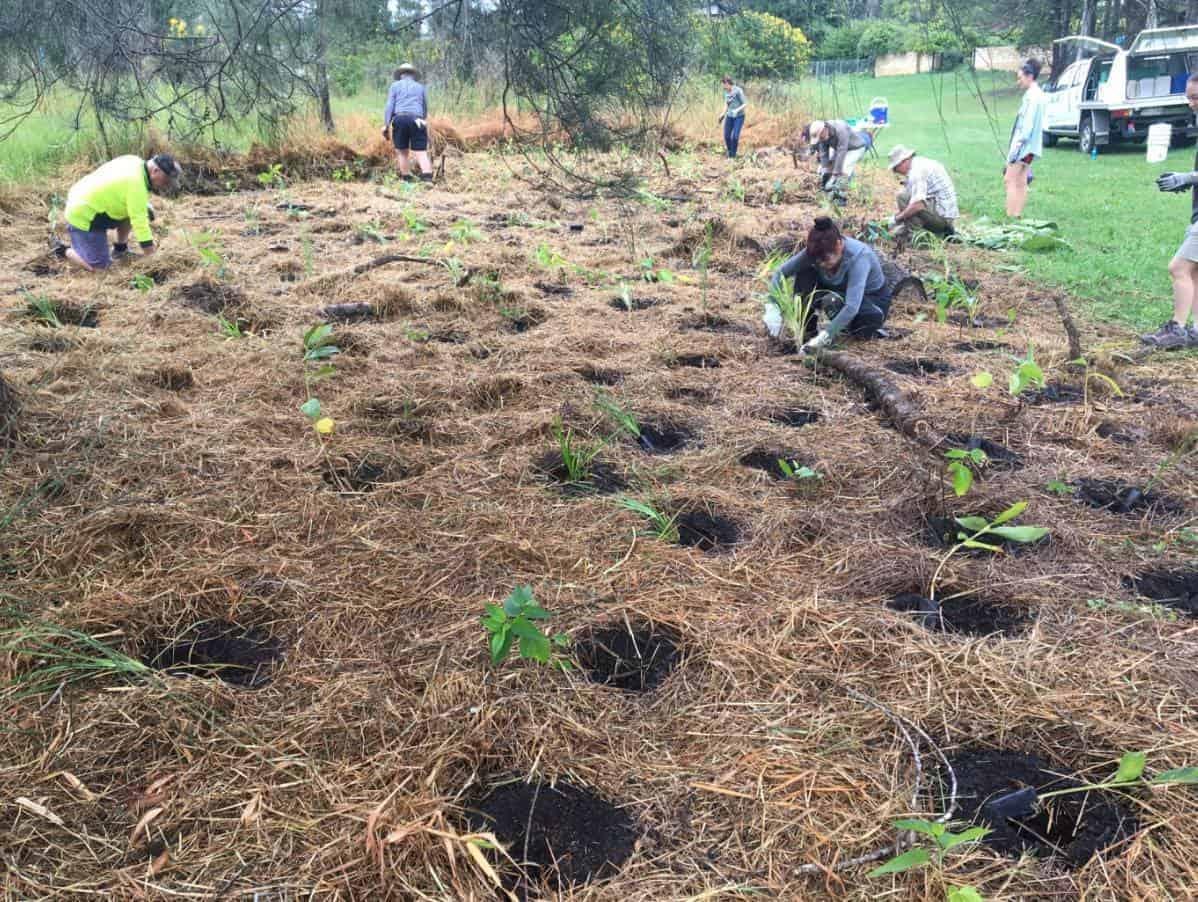 QLD | Floodplain Park Tree Planting