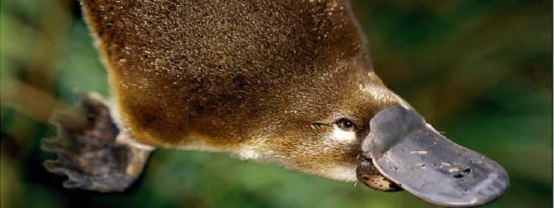 Platypus Survey & Snowies Camping